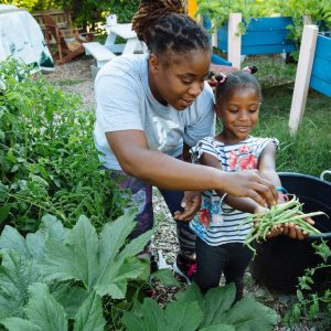 Super Giant Community Garden: Planting the Seeds of Change