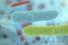 Emory Symposium: The Microbiome and Human Health