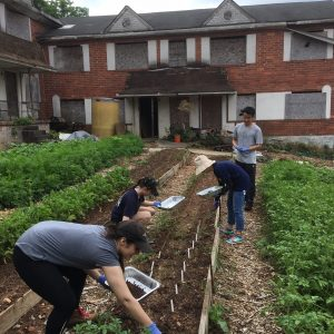 Partnering with Atlanta Gardeners to Measure Soil Contamination and Exposure